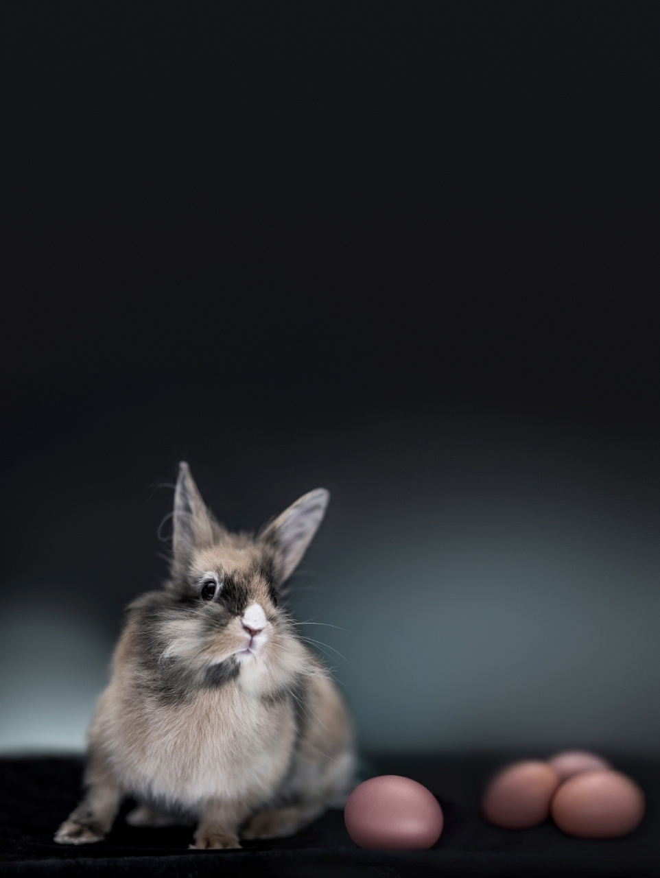 portrait d'un lapin de Pâques