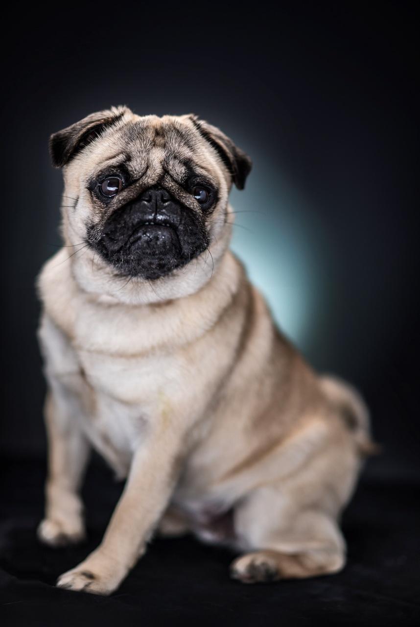 portrait d'un chien en studio