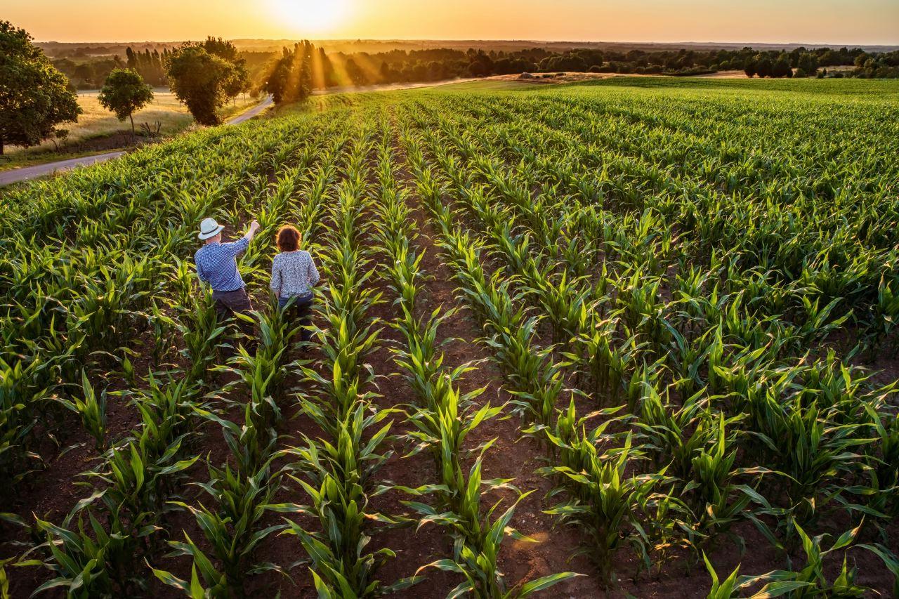 Reportage photo auprès d'un agriculteur céréalier en Pays de la Loire