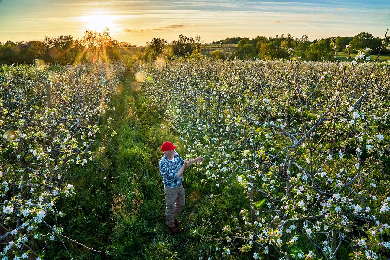 image d'un agriculteur dans son champ de pommier en fleurs