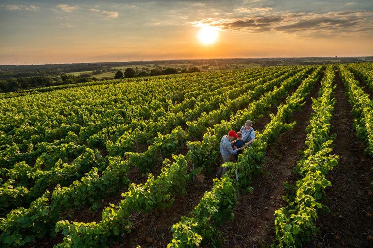 Reportage extérieur chez un viticulteur